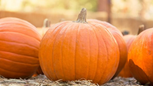 Pumpkin flavored drinks and foods tend to contain lots of sugar, leading to tooth decay.